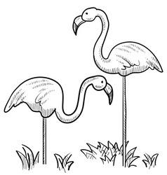 Doodle yard flamingos vector