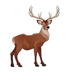Elegant deer vector