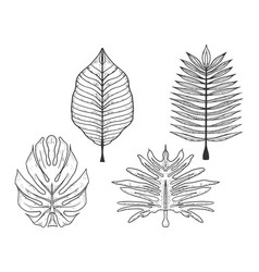 Palm trees leaves set sketch engraving vector