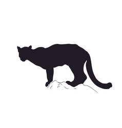 panther silhouette vector image