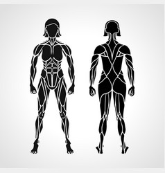 Anatomy female muscular system exercise vector