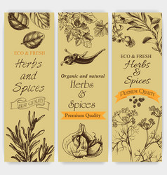 Background sketch herbs and spices banner vector