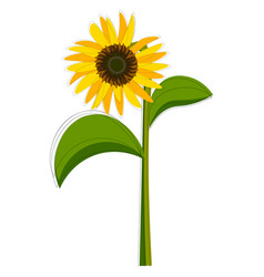 Clipart a sunflower set isolated on vector