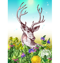 deer and wildflowers vector image