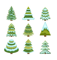 set christmas trees winter firs and pines in vector image