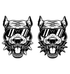 Set head angry pitbull in sunglasses vector