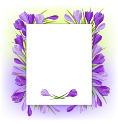 Spring flowers crocus natural background vector image