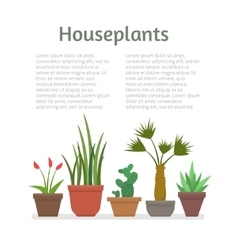 House plants and flowers vector