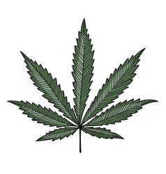 cannabis leaf sketch for your design vector image