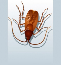 Cockroach vector