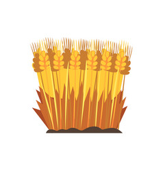 Field of ripe wheat design element for bakery vector