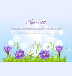spring poster greeting card springtime flowers vector image