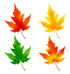 set of colorful maple tree leaf vector image vector image