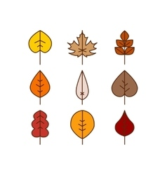 autumn leaves red orange yellow colors vector image