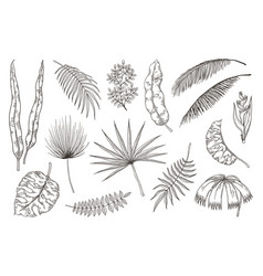 hand drawn exotic leaves tropical plants nature vector image