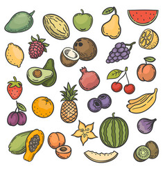 sketch fruits hand drawn color fruits apple vector image