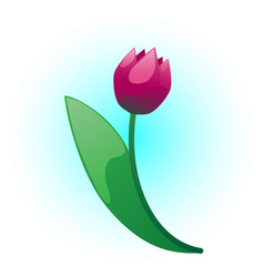 tulip flower vector image