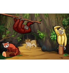 Wild animals in the cave vector image