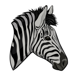 Zebra head isolated on a white background vector