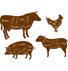 Beef pork chicken and lamb meat cuts vector image vector image