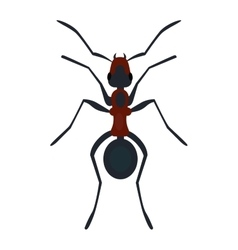 Ant nsect flat vector