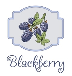 Blackberry sticker with branch and leaves vector