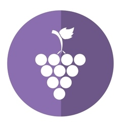 Fresh grape fruit purple circle shadow vector
