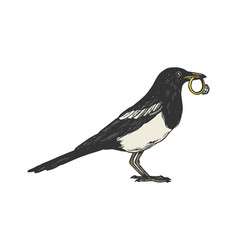 Magpie bird with golden ring color sketch vector