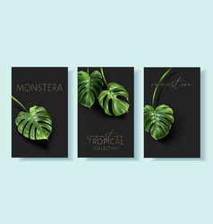 Monstera banners with green tropical leaves vector