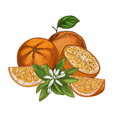 Orange fruits halves and pieces with flower f vector