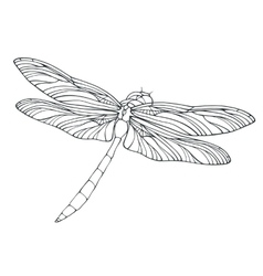 Outline dragonfly isolated on white vector