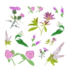 Set of drawing wild flowers vector