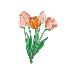 tulip bouquet set isolated vector image