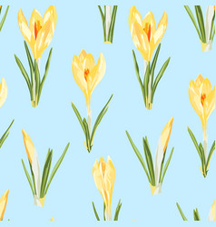 yellow crocuses flowers seamless pattern vector image