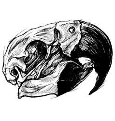 Macaw Skull vector image