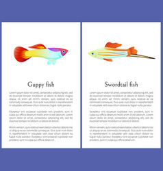 Guppy and swordtail fish isolated on white icons vector