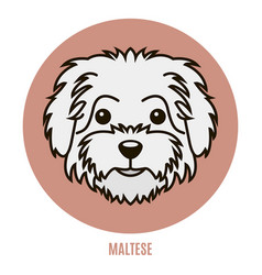 Portrait of maltese vector