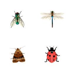 set of bug realistic symbols with wasp ladybug vector image