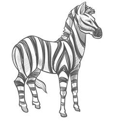 Zebra equine animal monochrome sketch outline vector