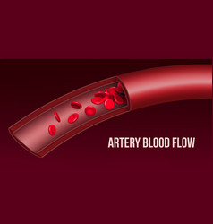 Creative of artery red blood vector