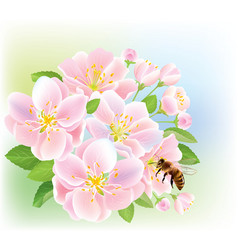 Flowering branch of apple with bee vector image