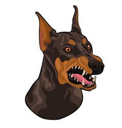 Head a barking doberman isolated on a white vector