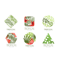 tropical logo design collection geometric badges vector image