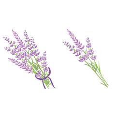 set of two purple lavender flowers bouquets vector image