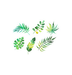 Green tropical palm leaves collection beautiful vector