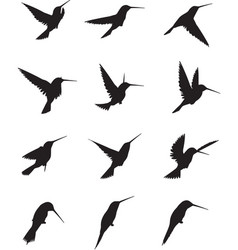 Hummingbird silhouettes vector