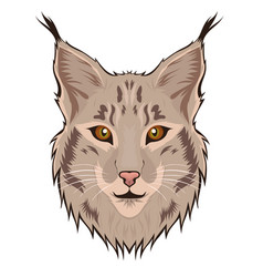 lynx head isolated on a white background vector image