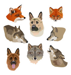 portraits of wolves foxes and dogs vector image