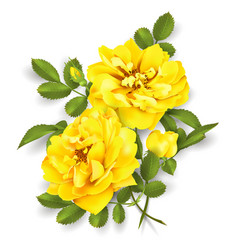 Realistic yellow rose 3d roses vector