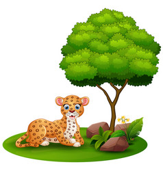 cartoon leopard lay down under a tree on a white b vector image